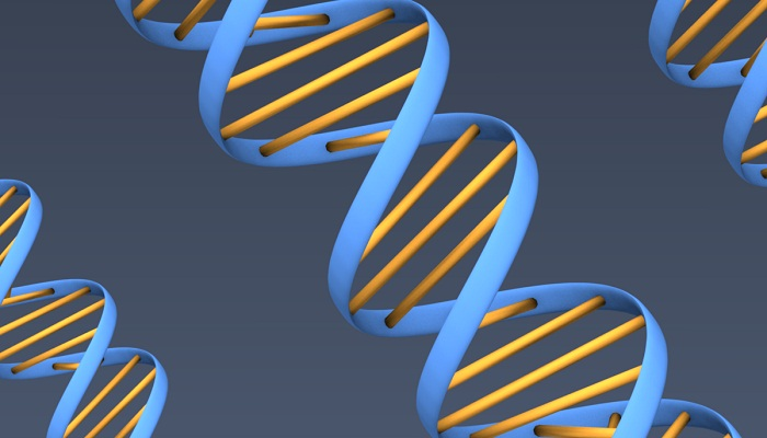 dsDNA_doubleHelix_threeStrands_3